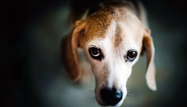 A morte do cachorro no Carrefour faz a gente pensar em que tipo coisa nos transformamos