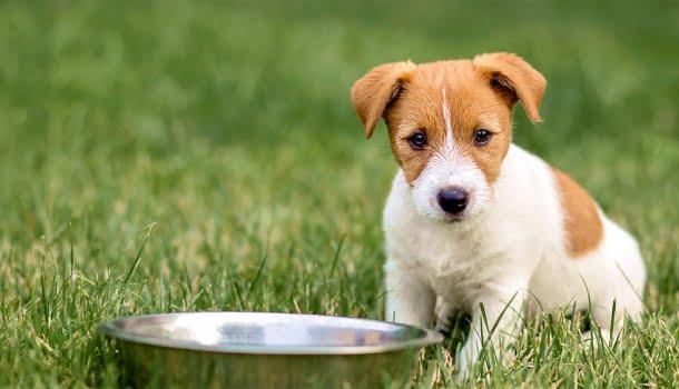 Ter um cachorro pode te ajudar a viver mais e melhor, diz estudo