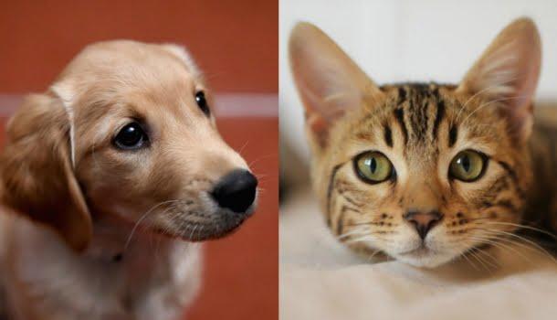 Música para animais: gerador de playlists para cachorros, gatos, hamsters e pássaros