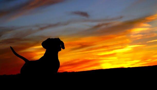 Quando nosso cão morre, morre um pouco de nós