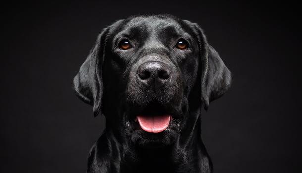 O brasileiro e seus complexos caninos
