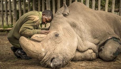 As 40 fotografias mais curtidas no Instagram da National Geographic