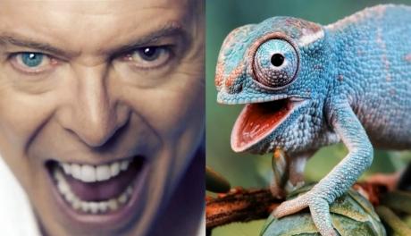 David Bowie foi um camaleão? Não foi, não