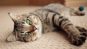 Adote um gato! Você ainda não sabe, mas ele transformará a sua vida