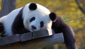 11 zoológicos e oceanários online e em tempo real para ver com as crianças durante a quarentena